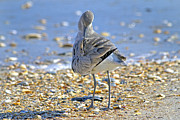 Sandpiper Prints - Sandpiper Print by Betsy A Cutler East Coast Barrier Islands