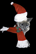 Christmas Outfit Framed Prints - Santa Cat Framed Print by Sally Weigand