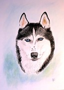 Husky Drawings Metal Prints - Sasha Metal Print by Jane Baribeau