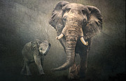Brian Tarr - Save The Elephants