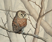Little Birds Paintings - Sawhet Owl Woods Watcher by Renee Forth Fukumoto