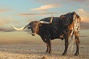 Texas Longhorns Photos - Say What? by Robert Anschutz
