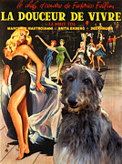 Scottish Deerhound Art - La Dolce Vita Movie Poster Print by Sandra Sij