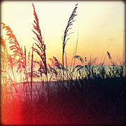 Oats Prints - Sea Oats at Sunset Print by Chris Andruskiewicz