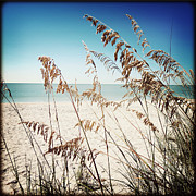 Sea Oats Framed Prints - Sea Oats Framed Print by Chris Andruskiewicz