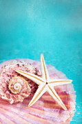 Holiday.summer Posters - Sea Treasures Poster by Viaina