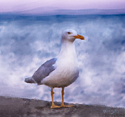 Albatross Digital Art Posters - Seagull Poster by Monika Wisniewska