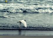 Lead Framed Prints - Seagull  Framed Print by Stylianos Kleanthous