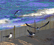 Bird Prints - Seagulls of Buxton Beach Print by Cathy Lindsey