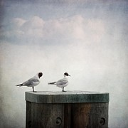 Metal Pole Photos - Seagulls by Priska Wettstein