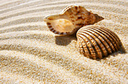 Beach Shell Sand Sea Ocean Art - Seashell and Conch by Carlos Caetano