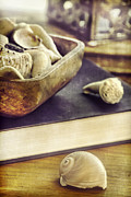 Interior Still Life Photo Metal Prints - Seashells Metal Print by HD Connelly