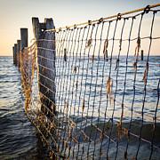 Tim Hester - Seaside Nets