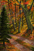 Autumn In The Country Prints - September Road Print by Frank Wilson