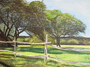 Melissa Torres - Shady Oak Trees