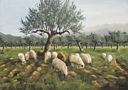 Flock Of Sheep Painting Posters - Sheep In Olive Grove Poster by Anna Poelstra Traga