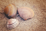 Shells  Print by HJBH Photography