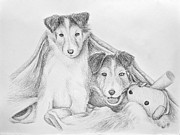 Sheepdog Drawings - Shetland Sheepdog Puppy by Jeanette Kabat