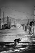 Dog Print Photo Prints - Should I Stay or Should I Go Print by Daniel Zrno