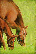 Grazing Horse Posters - Side By Side Poster by Darren Fisher