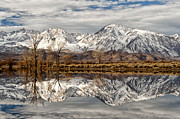 Eastern Sierra Posters - Sierra Reflections Poster by Cat Connor