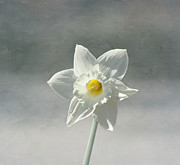White Flower Photos - Simplicity by Kim Hojnacki