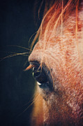 Horse Pictures Prints - Skipys Eye Print by Angela Doelling AD DESIGN Photo and PhotoArt