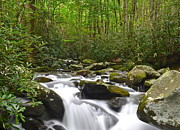 Mountain Fork Creek Prints - Smoky Mountain National Park Print by Robert Harmon