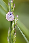 Snail Framed Prints - Snail on Grass Framed Print by Nailia Schwarz
