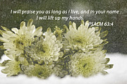 Carol Sawyer - Snow Flowers Scripture