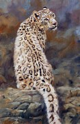 Wolves Painting Prints - Snow Leopard Print by David Stribbling