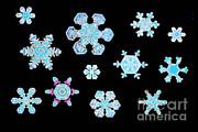 Scott Camazine - Snowflakes