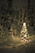 Snowy Night Night Photo Prints - Snowman Stands In A Snowcovered Spruce Print by Kevin Smith