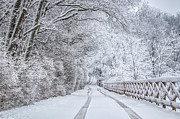 Snow On Road Framed Prints - Snowy Lane Framed Print by Dawn Smith