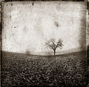Solitary Tree In Limagne Landscape. Auvergne. France Print by Bernard Jaubert