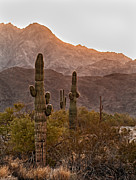 Sized Metal Prints - Sonoran Desert Metal Print by Robert Bales