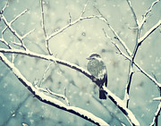 Snowflakes Pyrography Posters - Sparrow on the snowy branch Poster by Jelena Jovanovic