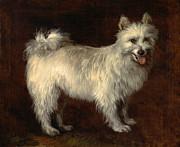 Thomas Gainsborough - Spitz Dog by Thomas Gainsborough