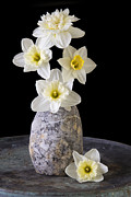 Easter Flowers Photo Prints - Spring Daffodils Print by Edward Fielding