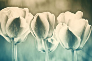Tulips Metal Prints - Spring Inspiration Metal Print by Angela Doelling AD DESIGN Photo and PhotoArt