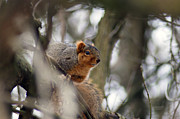 Off The Beaten Path Photography - Andrew Alexander - Squirrely