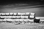 Sask Prints - stack of frozen snow covered hay bales in a field Forget Saskatchewan Canada Print by Joe Fox