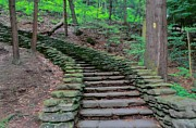Stairway In The Woods Print by Kathleen Struckle