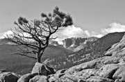 Colorado Landscape Photography Posters - Standing Tall Poster by James Steele