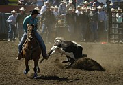 Steer Photos - Steer Wrestling by Jeff  Swan