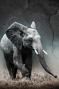 Contentment Prints - Stone Texture Elephant Print by Mike Gaudaur