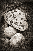 Therapy Photo Prints - Stones Print by Elena Elisseeva