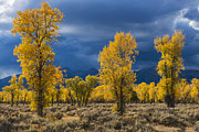 Autumn Landscape Art - Storm Light by Joseph Rossbach