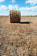 Backgrounds Pyrography Metal Prints - Straw Bales at a Stubbel Field Metal Print by Svetoslav Radkov