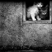 Homeless Pets Prints - Stray Wet Kittens Print by Lane Erickson